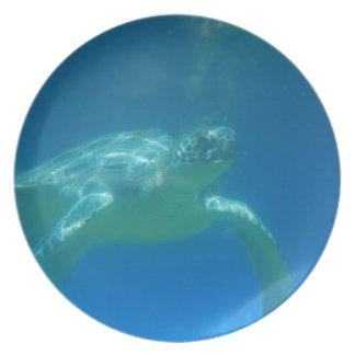 Placa de la nadada de la tortuga de mar platos