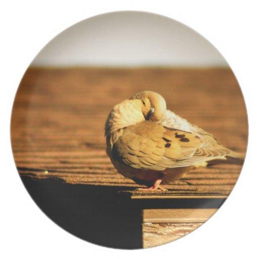Placa de la paloma de la mañana que dormita plato