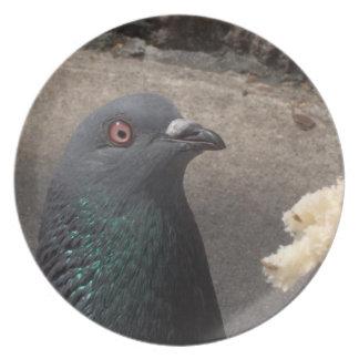 Placa de la paloma platos de comidas