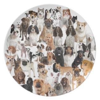 Placa de la raza del perro platos