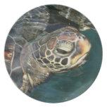 Placa de la tortuga de la natación plato de cena