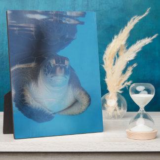 Placa de la tortuga de mar del bebé