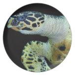 Placa de la tortuga de mar del Leatherback Platos