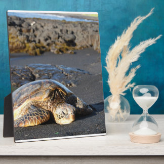 Placa de la tortuga de mar
