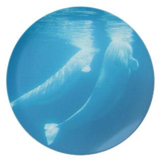 Placa de las ballenas de la beluga plato de cena