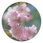 Placa de las flores de cerezo plato de comida
