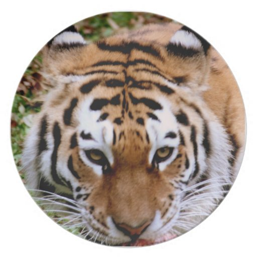 Placa de las marcas del tigre plato de cena