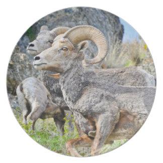 Placa de las ovejas de Bighorn Plato