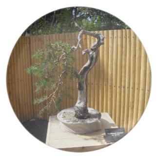 Placa de los bonsais plato