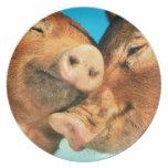 Placa de los cerdos platos de comidas