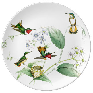 Placa de los colibríes de Goulds Plato De Cerámica