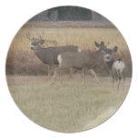 Placa de los dólares y de los ciervos de la gama plato