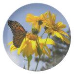 Placa de los girasoles de la mariposa de monarca N Plato De Cena