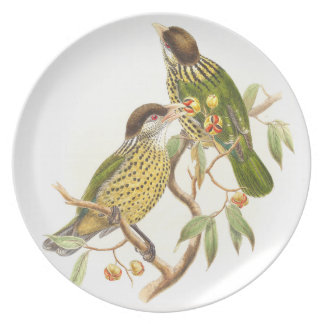 Placa de los pájaros del Catbird de Goulds Plato De Cena