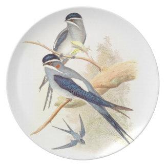 Placa de los pájaros del trago de Gould Plato De Comida