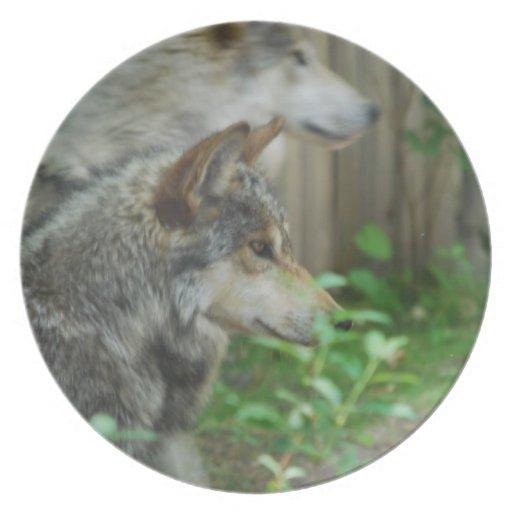 Placa de los pares del lobo plato de cena