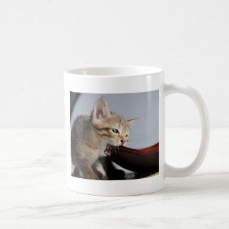 Placa de madera penetrante del gatito taza básica blanca