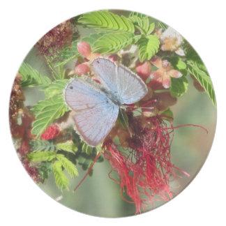 Placa de mariposa azul marina plato de comida
