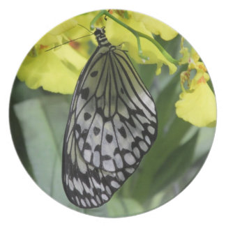 Placa de mariposa de papel de la cometa plato de comida
