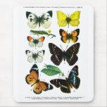 Placa de mariposas europea II Mousepad Alfombrillas De Raton