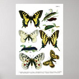 """Placa de mariposas I 24"""" x 36"""" Póster"""