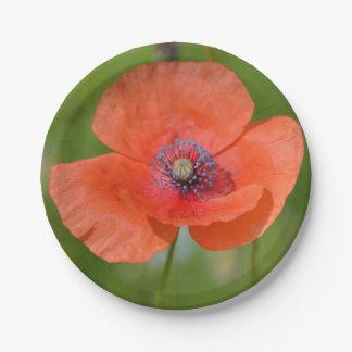 Placa de papel de la amapola roja platos de papel