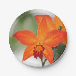 Placa de papel de la orquídea anaranjada tropical plato de papel de 7 pulgadas