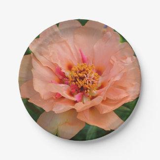 Placa de papel del flor rosado amelocotonado plato de papel de 7 pulgadas