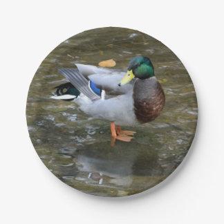 Placa de papel del pato del pato silvestre (varón) plato de papel de 7 pulgadas