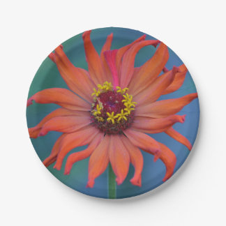 Placa de papel del Zinnia anaranjado Platos De Papel