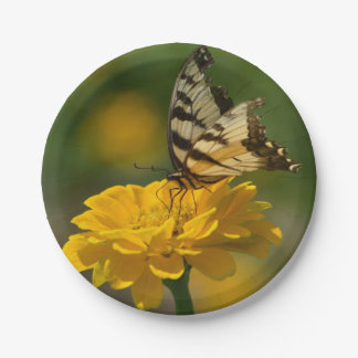 Placa de papel del Zinnia de la mariposa Platos De Papel