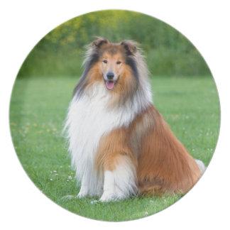 Placa de pared hermosa de la foto del perro áspero plato para fiesta