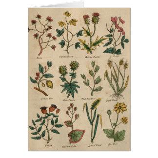 Placa de plantas tarjeta de felicitación