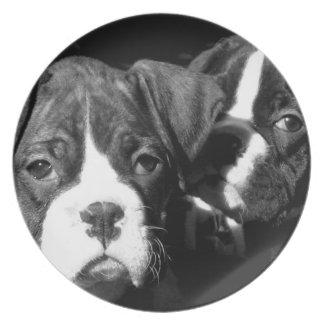 Placa decorativa de los perritos del boxeador platos