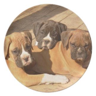 Placa decorativa de los perritos del boxeador platos para fiestas