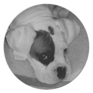 Placa decorativa del perrito del boxeador plato de comida