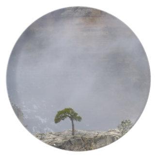 Placa del árbol del Gran Cañón Platos
