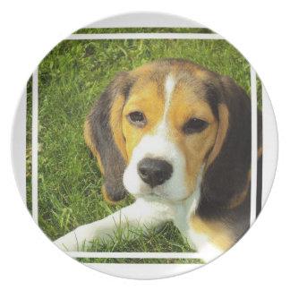 Placa del beagle platos