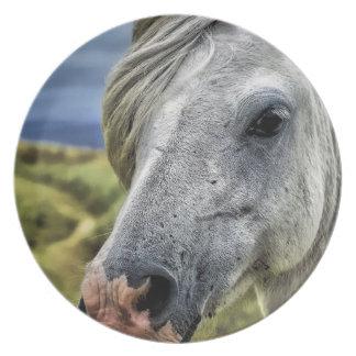 Placa del caballo gris/blanco platos de comidas