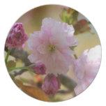 Placa del cerezo plato para fiesta