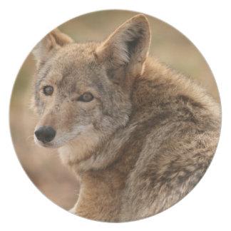 Placa del coyote plato