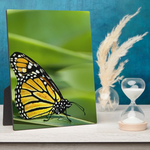Placa del diseño de la mariposa de monarca