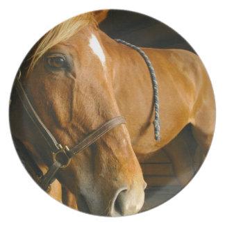 Placa del diseño del caballo de la castaña platos