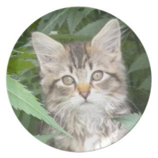 Placa del gatito del Coon de Maine del Tabby Platos De Comidas