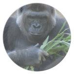 Placa del gorila del Silverback Plato Para Fiesta