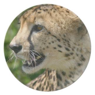 Placa del guepardo del gruñido platos