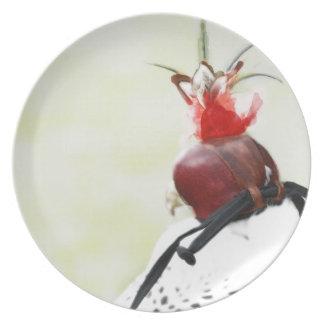 Placa del halcón platos de comidas