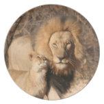 Placa del león y de Cub de león Platos Para Fiestas