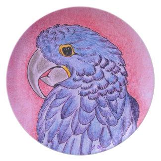 Placa del Macaw del jacinto Platos