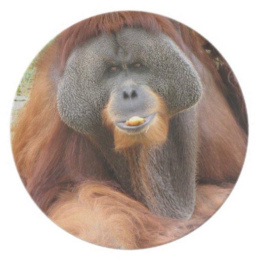 Placa del mono del orangután del Pongo Plato Para Fiesta